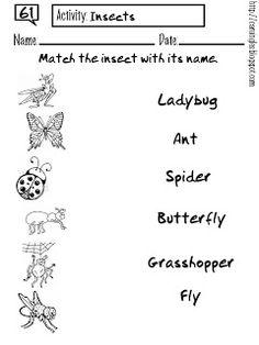 Ficha para reforzar el aprendizaje de vocabulario en relación a los insectos.
