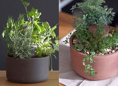 Self Watering Planter by Joey Roth — ACCESSORIES -- Better Living Through Design