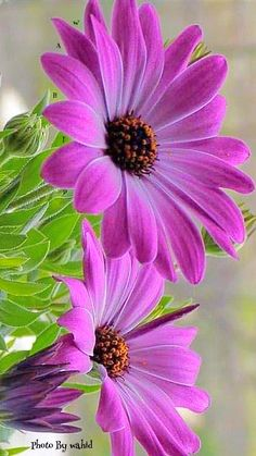 34 Best Ideas For Wall Paper Flowers Nature Plants Beautiful Flowers Photos, Beautiful Flowers Wallpapers, Flower Photos, Amazing Flowers, Pretty Flowers, Flowers Nature, Exotic Flowers, Colorful Flowers, Purple Flowers
