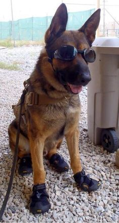 The doggles make him so much cooler