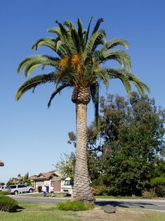 Website with names and pictures of San Diego plants and trees.