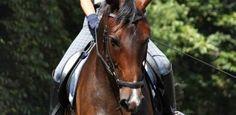 Galopparbeit: So gymnastizierst du dein Pferd im Galopp und reitest Übungen richtig!