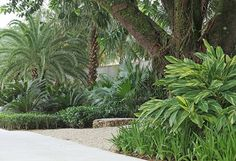 Jardim tropical a beira-mar projetado por Alex Hanazaki