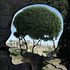 CULTURE N LIFESTYLE — Surreal Human Head Silhouettes Expose the Natural...