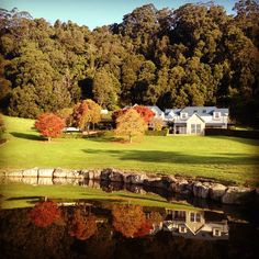 Oh Autumn you are just TOO beautiful... #autumn #prettyautumn #drawingroomsofberry #berrynsw