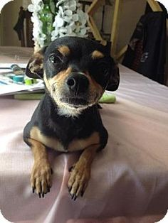 Where To Look In Tucson For A Small Rescue Dog