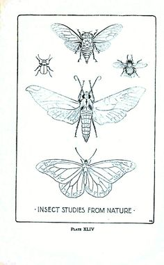 Vintage Printables! Animal - Insect - Insect line drawings