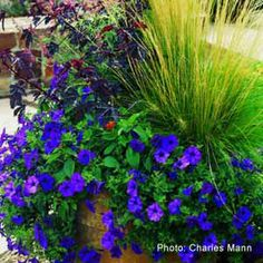 45 Cool Container Gardens For Your Deck, Entryway or Yard - Plant Care Today