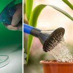 As Plantas de Seu Jardim Não Crescem? Conheça o Truque da Água Oxigenada para Estimular o Crescimento