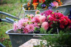Flower Farm, September, Flowers, Plants, Plant, Royal Icing Flowers, Flower, Florals, Floral