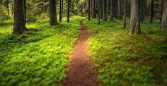 #Υγεία #Διατροφή Έρευνες επιβεβαιώνουν πως μια βόλτα στο δάσος ωφελεί την υγεία και την ψυχολογία ΔΕΙΤΕ ΕΔΩ: http://biologikaorganikaproionta.com/health/208847/