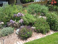Kate Presents: Crafstman garden in Northpark shows off waterwise plantings
