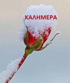 Good Night, Good Morning, Greek Beauty, Greece, Humor, Food, Nighty Night, Buen Dia, Greece Country