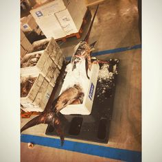 This morning at the fish market Swordfish #swordfish #mercatoittico #milan #city #morning #love #photo #iphone5 #filter #fish #eat #time #italy #it #post #socialnetwork #food #goodmorning #tumblr #twitter #foursquare #swarm #pinterest #instagram #followme #followers #kiss #friends #