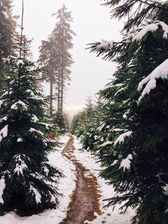 Winter path / photo by Mathias Kuse
