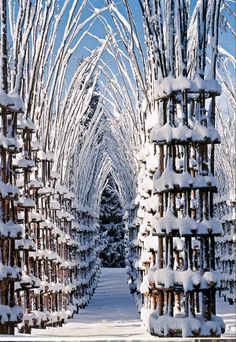 Wow. The Tree Cathedral, by Italian artist Giuliano Mauri, is at the base of Mount Arera in Northern Italy. The structure is formed by weaving more than 600 branches to form 42 columns. Trees are planted inside each column, and in time, the trees will outgrow the structure and create a natural wall and roof -- a cathedral made entirely out of trees.
