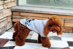 KING-S PET Dog Cat Clothes Fashion Style Dog