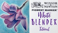 Winsor & Newton Pigment Markers - White blender tutorial & Magnolia Drawing