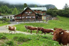 saftig grüne Weiden #almsommer in #flachauwinkl #südwienerhütte #visitflachau