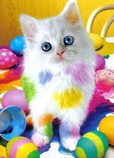 HAPPY EASTER! ❤️ A cute white kitten with blue eyes and rainbow colored Easter eggs. #Easter  #Cat #Rainbow | Gallery Of Easter Cats