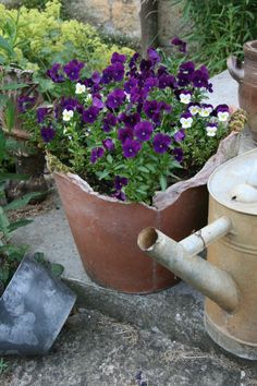 Yes, even pansies in a broken pot.