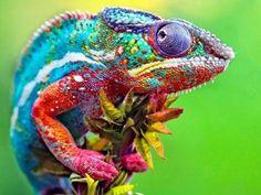 Dieren: Leguanen En Hagedissen / Animals: Iguanas And Colorful Animals, Nature Animals, Animals And Pets, Cute Animals, Colorful Lizards, Exotic Animals, Colorful Fish, Tropical Fish, Les Reptiles