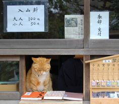 working cat in Japan