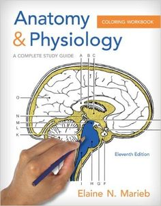 Anatomy Physiology Coloring Workbook A Complete Study Guide 9780321960771 Medicine Health