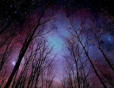 purple trees at night - Google Search