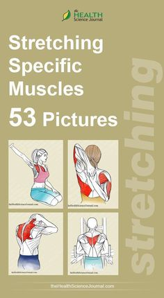 Starting Stretching – 53 Full Body Stretches for Beginners - The Health Science Journal - Care - Skin care , beauty ideas and skin care tips Calendula Benefits, Matcha Benefits, Lemon Benefits, Coconut Health Benefits, Heart Attack Symptoms, Tomato Nutrition, Body Stretches, Flexibility Exercises, Stretching Exercises