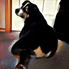 My dogboy
