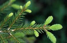 Cyklus, který vás naučí, jak nakládat s bylinkami a jak je správně použít. Life Is Good, Plant Leaves, Healthy Recipes, Healthy Food, Herbs, Homemade, Nature, Plants, Gardening