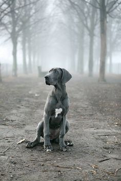 Not sure where to pin.... Great Danes or Hearts! A beauty