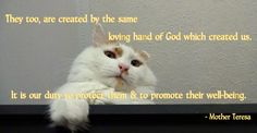 """""""They too are created by the same loving hand of God which created us. It is our duty to protect them & to promote their well-being."""" Mother Teresa. -- cat, kitty, feline, furry, face, above, up, curled ear, look, saying, quote, belief, god, created, creation, protect, promote, animal advocate, well being, advocacy, cat lover, pets, pet, furkid, photo, photograph, meme, google theme."""