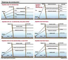 Fuentes:diariodecuyo.com.ar | pinterest.com | vinopedia.com | ediocina.com | tecnovino.com | efeverde.com | copasycorchos.com