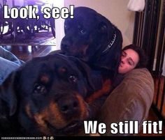 a perfect picture of how my 2 rotties think they are tiny when they are not.