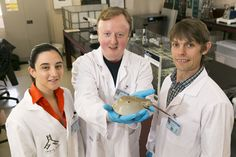 #Sothic co-founders, Natasha Leeuwendaal, Stephen Geary, and Kevin Kennedy. Blue Bloods: IndieBio EU Team Working to Synthesize Horseshoe Crab Blood.