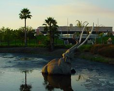 Examine fossils from the Ice Age, such as the saber tooth tiger, at the La Brea Tar Pits.