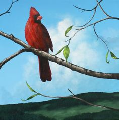 Cardinal – Online Painting Lesson - This lesson is about an hour long. I will take you through each detail of this painting, from painting the cardinal, branch and leaves. The hill and sky are not included in this lesson. I do a lot of close up shots to show how the brush is used to create shapes and highlights. I will also show you what brushes to use, how to mix the colors and apply the paint. Visit Tim Gagnon Studio http://www.timgagnon.com/lessons/cardinal-painting-lesson/
