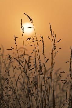 Misty Dawn by ~Andyw01