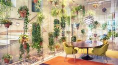 plants in office environment - Google Search