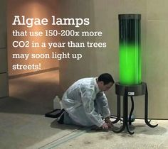 "These ""algae lamps"" were designed by biochemist Pierre Calleja."