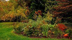 Bevor die Sonntagssonne kommt, ... ist es im Garten nicht ganz so bunt. Aber er hat trotzdem Herbstfarben. Und die wirken irgendwie beruhigend, oder ? :-)