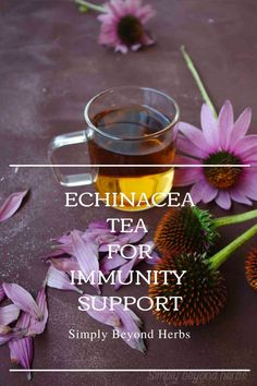 This herbal soothing echinacea tea has been used by indigenous people for thousands of years as a natural remedy for its healing properties Healing Herbs, Medicinal Herbs, Herb Recipes, Real Food Recipes, Herbal Remedies, Natural Remedies, Natural Skin Care, Natural Health, Tea For Colds
