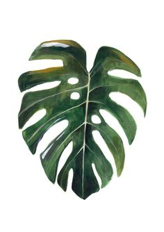 Image of Monstera hoja