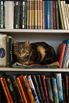 Even cats need spaces with books