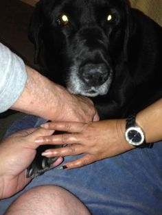 """"""" me, max, Nora and my dad"""" Blue Cross, Embedded Image Permalink, Dads, Animals, Animales, Animaux, Fathers, Animal, Animais"""