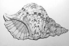 Seashell, ballpoint pen drawing by Mags Phelan Detailliertes Tattoo, Tattoos, Ballpoint Pen Drawing, Painted Shells, Pointillism, Pen Art, Sea Pearls, Mark Making, Sea Creatures