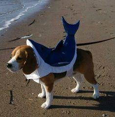 Beagle-shark #beagle