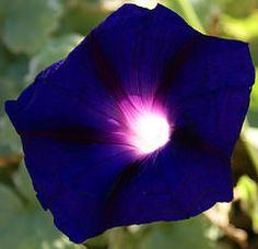 """""""Assim como há um sol do lado de fora, há um sol dentro, também. O sol exterior nasce e se põe, mas o interior está sempre presente. Ele nunca nasce, nunca se põe - é eterno. Se não conhecermos a luz interior e sua fonte, viveremos na escuridão."""" OSHO"""